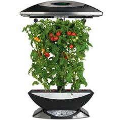 "The AeroGarden Extra Elite is an advanced, versatile, and fully-featured garden that comes with brushed stainless steel trim. It has twice the light and twice the height and gives you the greatest options for what you want to grow. It delivers larger, faster yields and healthier, fuller plants. It includes a 24"" extendable lamp arm and an optional 24-hour light cycle."