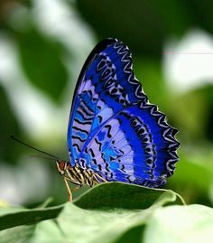 Blue and black patterned butterfly