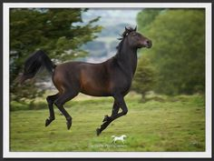 Horse photography | Equine photography | Horse Photographers