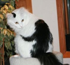 25 Animals Famous For Their Fur Markings