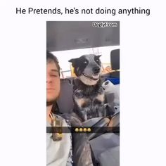Smart Dog - your daily dose of funny cats - cute kittens - pet memes - pets in clothes - kitty breeds - sweet animal pictures - perfect photos for cat moms Funny Dog Videos, Funny Animal Memes, Cute Funny Animals, Cute Baby Animals, Funny Cute, Funny Dogs, Pet Memes, Funny Memes, Hilarious