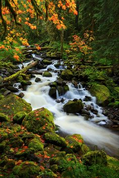 Oneonta Creek - Columbia River Gorge, Dodson, Oregon