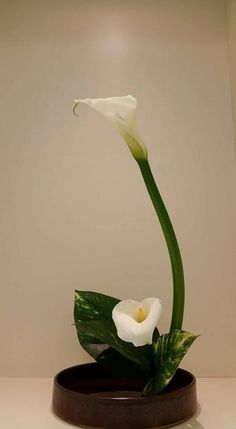 Ikebana made arrangement curve