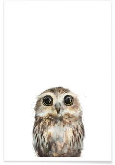 Little Owl as Premium Poster by Amy Hamilton | JUNIQE