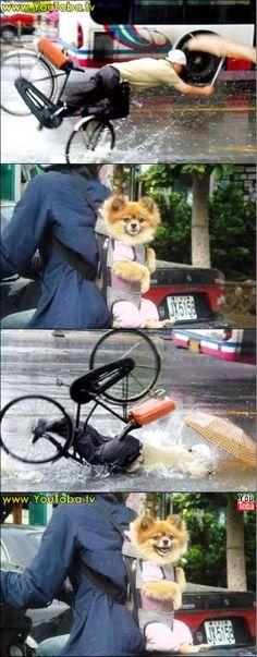 Os animais riem de você sim, amiguinho...