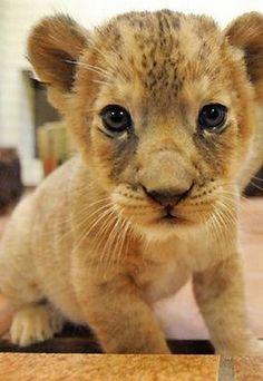 adorable!!❤️