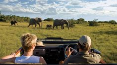Kichaka Private Game Lodge ( Grahamstown, South Africa ) All-inclusive rates mean twice-daily safari game drives on a Big Five game reserve. South Africa Holidays, Safari Game, Game Lodge, Private Games, Out Of Africa, Elephant Love, Game Reserve, African Safari, Travel Goals