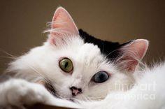 Title:  Black And White Cat  Artist:  Kaitlyn McCullinc http://www.kittyinny.com/