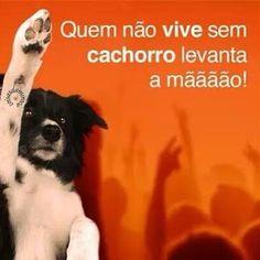 ☝️☝️☝️#filhode4patas #filhote #maedepet #paidepet #cachorro #petshop #petmeupet