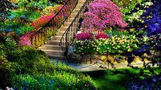 цветочный сад - Поиск в Google