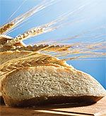 Wheat: The Unhealthy Whole Grain – Beyond the 4 Hour Body
