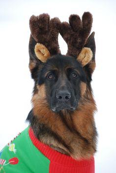 Happy Holidays from Reindeer Alternate #2
