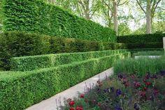 シデの生垣にアヤメやサルビアの庭:チェルシー・フラワー・ショー : アーバン・ガーデン・ウォッチング