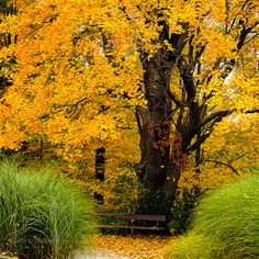 Photography: Canada in 50 Stunning Pictures Autumn Scenery, Autumn Nature, Autumn Garden, Autumn Trees, Beautiful World, Beautiful Places, Mellow Yellow, The Great Outdoors, Mother Nature