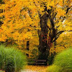 Beautiful...Edwards Gardens NorthYork, Ontario