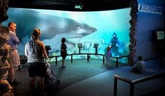 Fort Fisher aquarium.  Highly recommended!