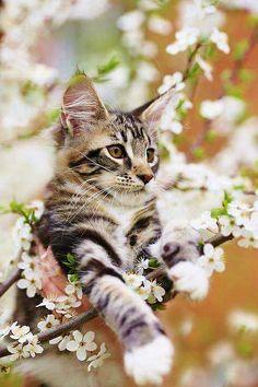 #SpringKitten 💕