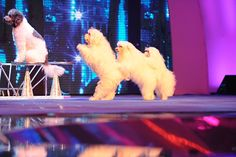 See photos from the second week of America's Got Talent semifinals! #AGT
