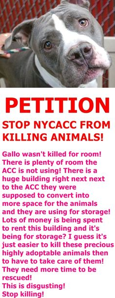 Petition · Bill de Blasio: Stop NYC Animal Control Centers from killing animals · Change.org