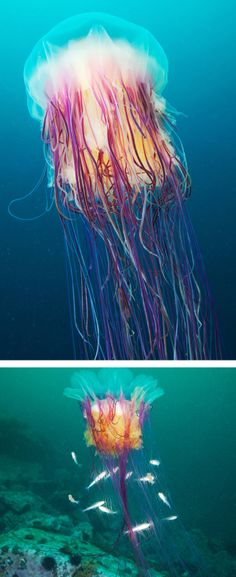 Medusa jellyfish. Stunningly beautiful.