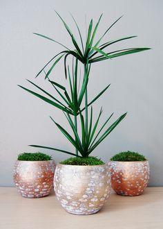 Design végétal, plantes stabilisées. Création et réalisation Adventive Interior plant Designer. www.adventive.fr