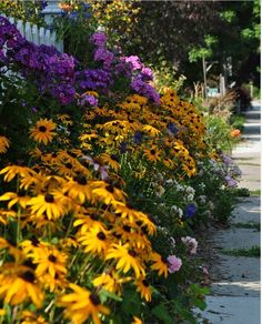 sidewalk side yard front yard less grass flowers gardening landscaping brighten your day - garden-landscaping - Cheap Landscaping Ideas, Front Yard Landscaping, Backyard Ideas, Texas Landscaping, Mulch Landscaping, Backyard Patio, Landscaping Borders, Residential Landscaping, Natural Landscaping