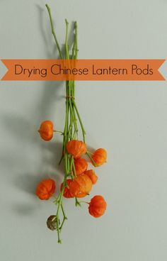 Ideas we Love - Drying Chinese Lantern Pods