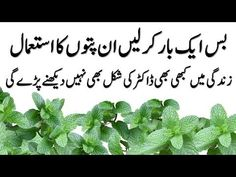 All images, music, pictures shown in the video belongs to their respective owners. Throat Pain, Sore Throat, Stomach Gas Relief, Health And Beauty Tips, Health Tips, Mint Leaves Benefits, Mint Leaves Recipe, Natural Blackhead Remover, Constipation Relief