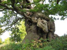 ancient tree houses | ancient oak tree hatfield park hertfordshire 2 1