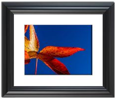 """11"""" x 14"""" Traditional Photography Prints / Wall Décor Nature Photograph: Fall Colors, Red and Yellow Foliage Against Sky. View all of the stunning Nature Photos by Landscape and Nature Photographer Melissa Fague at:  https://www.etsy.com/shop/PIPAFineart Limited edition fine art nature photography prints and canvas wraps are also available in a variety of sizes."""