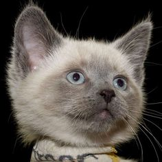 Pin On Cat Kitty