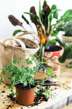 Follow This Simple Guide To Learn How To Grown Your Own Indoor Herb Garden  This Winter