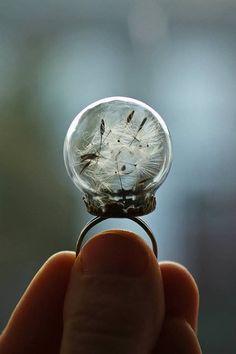 Real dandelion seed ring - handmade terrarium jewelry by RubyRobinBoutique Diy Jewelry, Jewelry Box, Jewelry Accessories, Jewelry Design, Jewelry Making, Jewelry Rings, Bling, Bijoux Diy, Schmuck Design