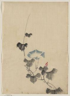 Katsushika Hokusai Title:[Blue blossom of morning glory on vine] Date:[between 1830 and 1850]