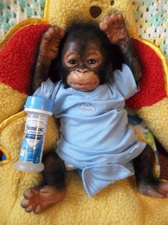 awwww..i always wanted a baby monkey..chimp..