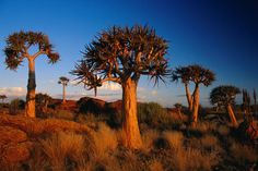 Travel & Adventures: South Africa ( Republic of South Africa ). A voyage to South Africa - Johannesburg, Cape Town, Pretoria, Lesotho, Kruger National Park. African Love, Kruger National Park, World View, Nature Reserve, Africa Travel, Dream Garden, Cape Town, Continents, Adventure Travel