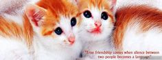 Cute Cat Pictures with Sayings | tags cat quotes sayings cute myfbcovers com is the original