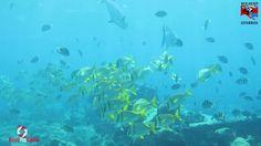 Buceo Arrecife 03