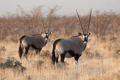 Virtual Field Trip - African Safari