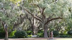 Mossy Oaks at the sculpture garden. New Orleans Art Museum. By Derek Smith