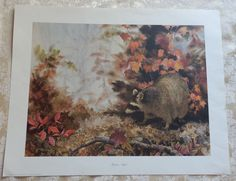 1983 Jean Vietor RACCOON SEQUEL Hand Signed Print 19 x 24 No. 95/1000 Autumn Vintage Art Prints, Sign Printing, Autumn, Signs, Painting, Animals, Ebay, Animais, Animales