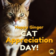 Happy Ginger Cat Appreciation Day!  Videos for Cats to Watch: www.tvbini.com  #tvbini #catTV #TVforcats #catgames #videoforcats #cats #videosforcats #catentertainment #youtubeforcats #catgame #catmovies #lovecats #catlover #catoftheday #cats #kittytv #gingercatappreciationday #orangetabby #gingercat #nationalgingercatday #everydayisnationalcatday