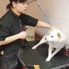 Animals Discover The way this talented groomer creates trust with this shibe in less than 60 seconds Cute Funny Animals, Funny Animal Pictures, Cute Baby Animals, Funny Dogs, Cute Puppies, Cute Dogs, Dogs And Puppies, Doggies, Nature Animals