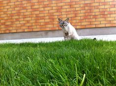 Three years ago my cat arrived here from St. Petersburg