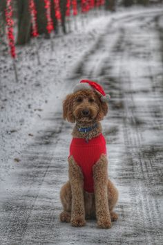 Showing off his new christmas outfit!