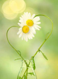 Daisy Love Photo Greeting Card Romantic by AnInspiredLens on Etsy