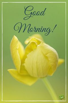 A new day starts! Put a smile on your friends' faces by posting these happy images on your timeline. Good Morning Flowers, Good Morning Good Night, Good Morning Images, Happy Images, Free Images, Spring Is Here, Morning Messages, Flower Images, God Is Good