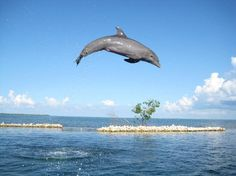 Dolphin Cove, Grand Cayman I went there on a cruise. So much fun!