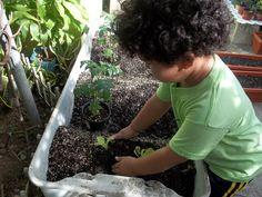 Plantar flores y otras hierbas no sólo permite traer a consciencia la importancia de las plantas para el ecosistema planetario, también provee herramientas acerca de cómo generar actos de cuidado hacia otro ser vivo