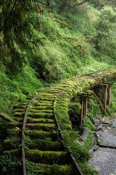 Abandoned Train, Abandoned Buildings, Abandoned Places, City Buildings, Nature Aesthetic, Urban Aesthetic, Fantasy Landscape, Nature Pictures, Forest Pictures
